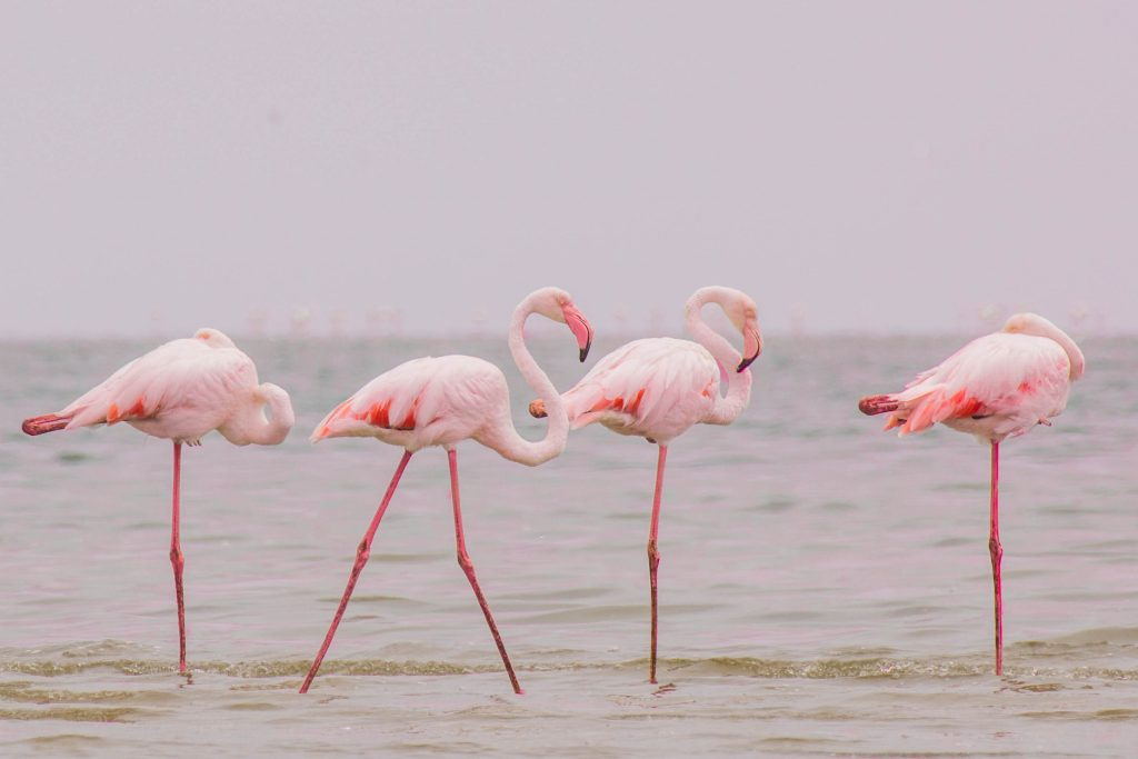 Flamingo Walvis Bay beautiful Namibia