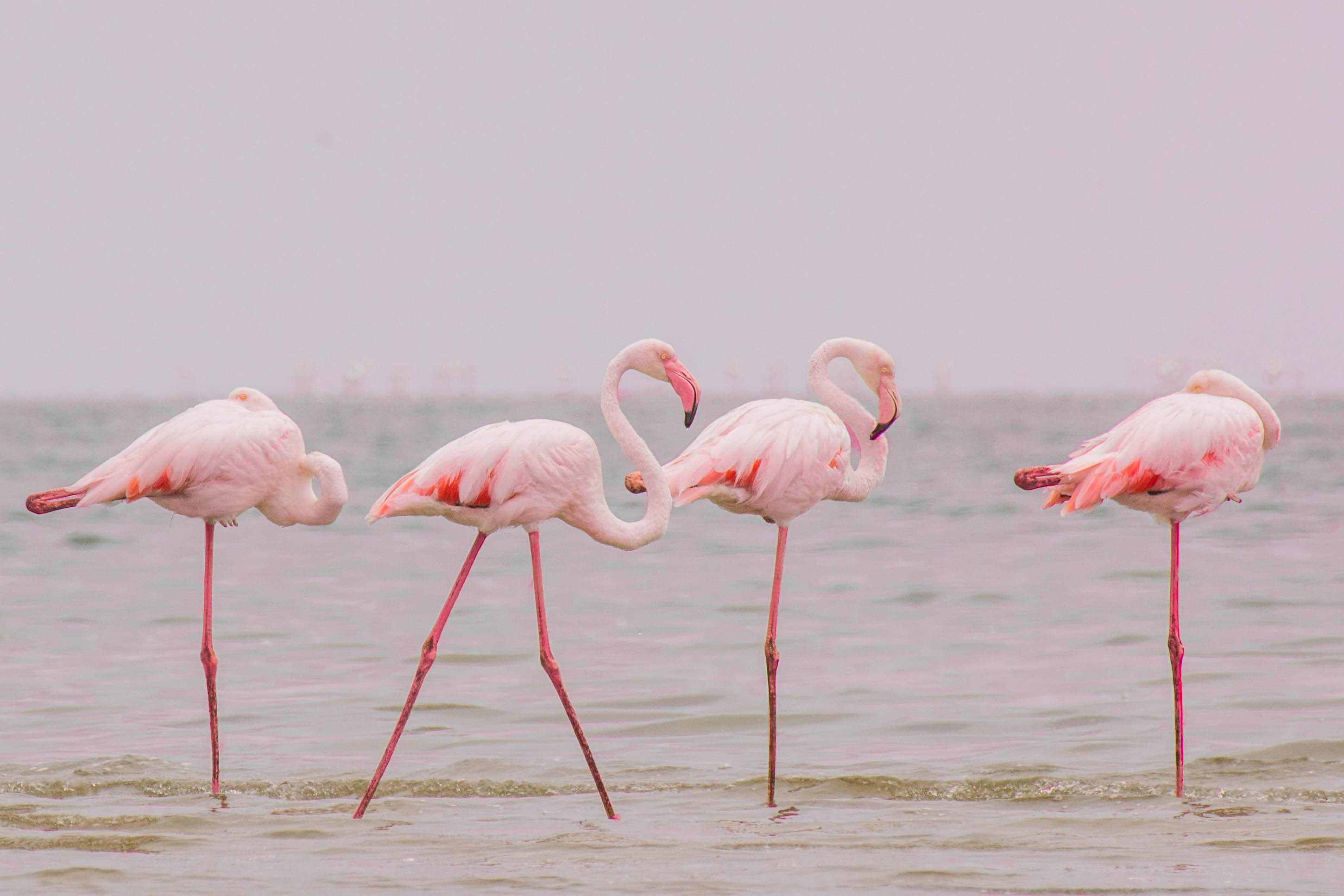 Flamingo's in Walvis Bay Namibia