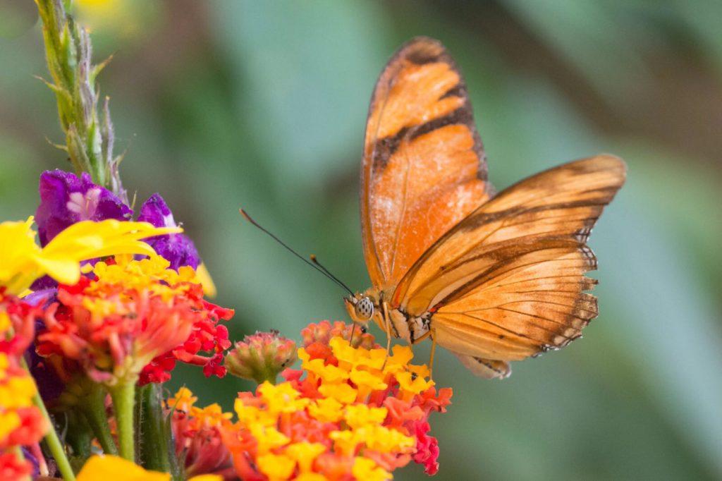 butterfly garden Monteverde Costa Rica