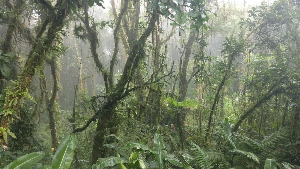 rainforest Monteverde Costa Rica